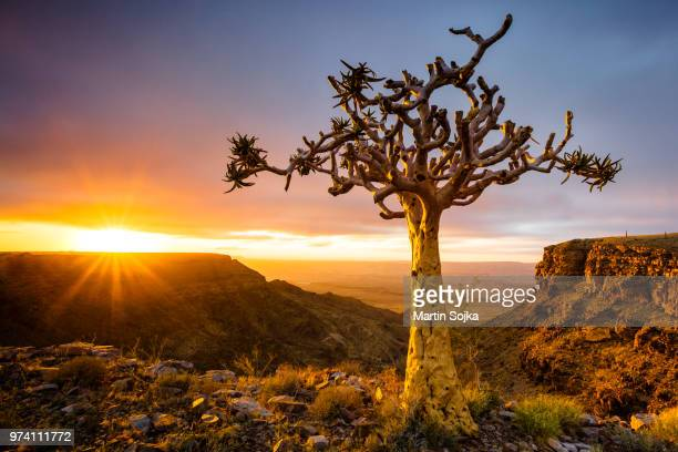 fish river canyon landscape with quiver tree, namibia - namibia stock pictures, royalty-free photos & images
