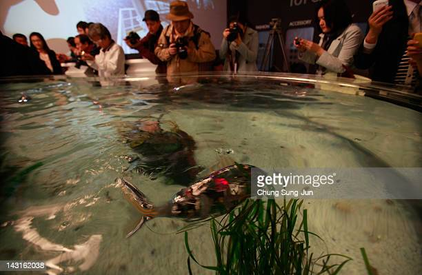 A fish robot swims at the Marine Robot pavilion a venue of the 2012 Yeosu Expo on April 20 2012 in Yeosu South Korea More than 105 countries 10...