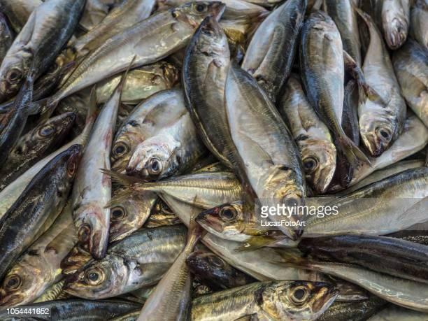 fish sardines and mackerel in the market - chicharrones fotografías e imágenes de stock