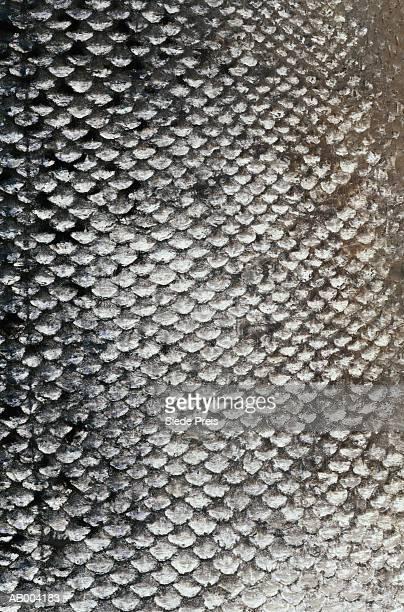 fish scales - fish scale pattern ストックフォトと画像