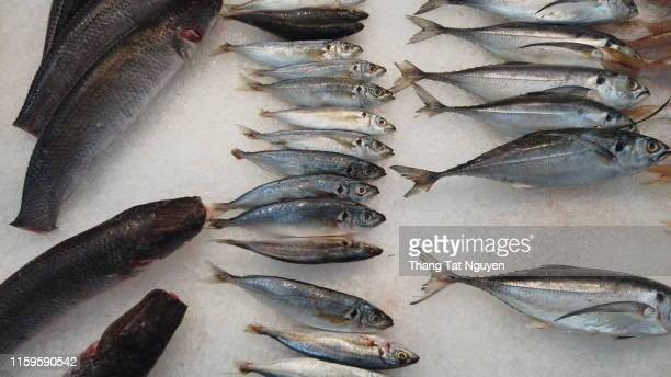 fish selling in market - grouper stock pictures, royalty-free photos & images