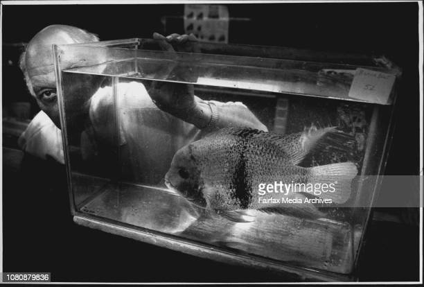 Fish Show Pics of Albert Myer 61 with one of his Favourite Fish called Baby Face February 11 1990