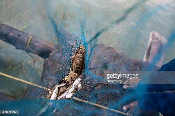 Fish sit in the net of a shoreoperated lift net at the Fort Kochi Chinese fishing nets in Cochin Kerala India on Friday May 29 2015 UBS Group AG says...