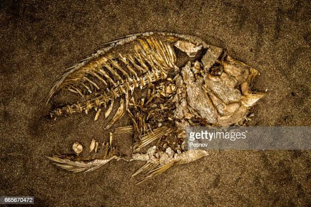 fish skeleton - fish skeleton stock photos and pictures