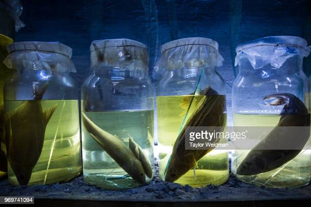 Fish species native to the Aral Sea are displayed at a museum in Aralsk Kazakhstan The Aral Sea once the fourthlargest lake in the world started...