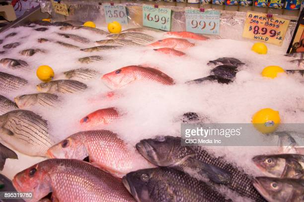 Fish Store Images
