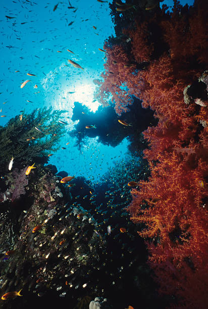 Fish Surrounding Red Coral