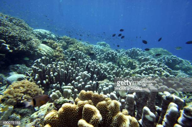Fish swim in the coral reef of Bunaken Island national marine park in northern Sulawesi on May 14 2009 The tiny island is a marine protected area...