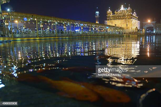 Fish swim in the holy sarover at the illuminated Sikh shrine Golden temple in Amritsar on November 112015 on the occasion of Bandi Chhor Divas or...