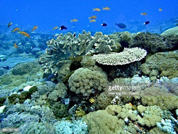 Fish Swimming By Coral Reef Undersea