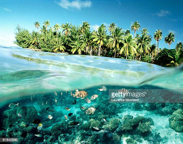 fish swimming by island - tahiti stock pictures, royalty-free photos & images