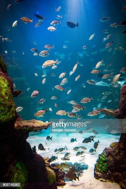 peixe a nadar desde o fundo do oceano - arquipélago - fotografias e filmes do acervo
