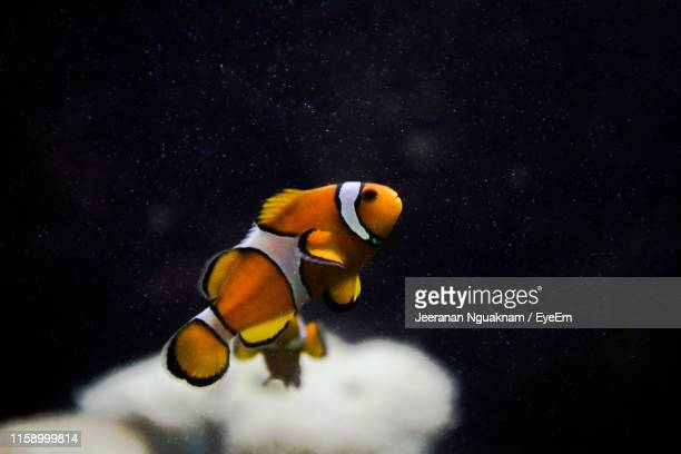 fish swimming in aquarium - nemo museum stock pictures, royalty-free photos & images