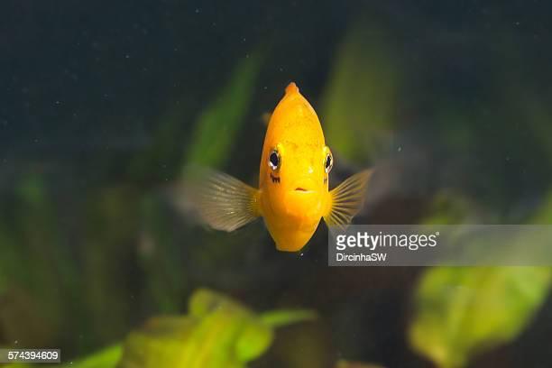 Fish swimming in  aquarium.