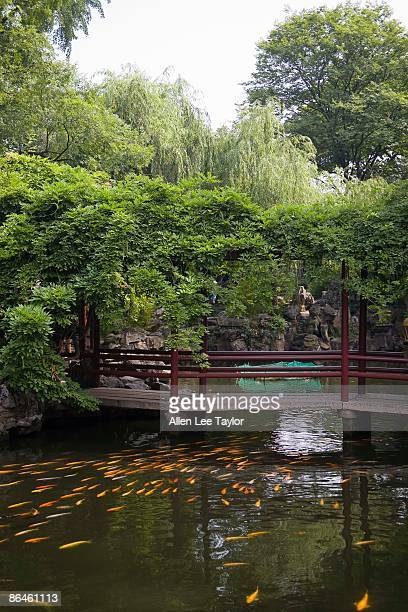 fish swimming in pond in lingering garden suzhou, china - lingering bildbanksfoton och bilder