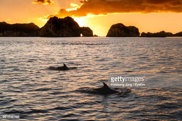 fish swimming in sea against sky during sunset - whangarei heads stock pictures, royalty-free photos & images