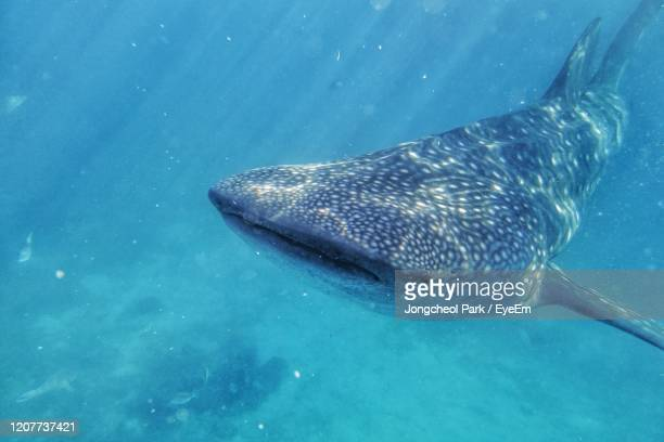 fish swimming in sea - shark stock pictures, royalty-free photos & images