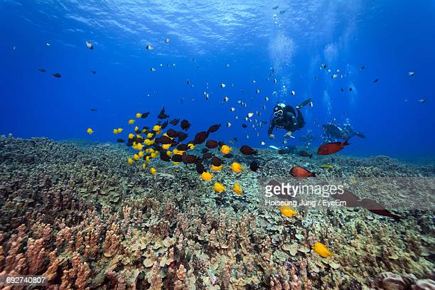 fish swimming in sea - northern mariana islands stock pictures, royalty-free photos & images