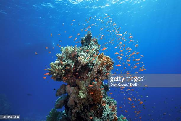 fish swimming in sea - reef stock pictures, royalty-free photos & images