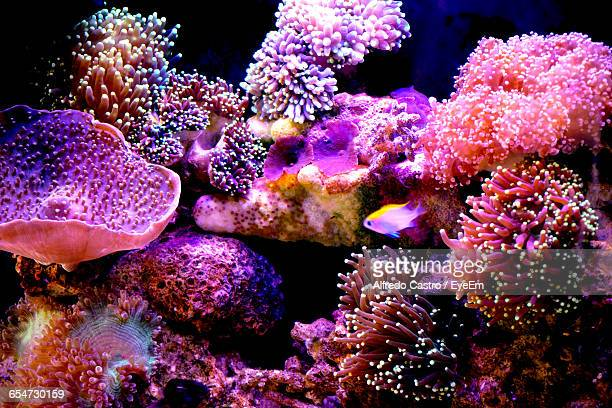 Fish Swimming Near Pink Corals