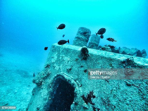 fish swimming undersea - sunken stock pictures, royalty-free photos & images