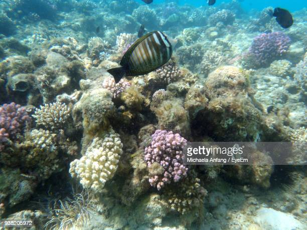 fish swimming undersea - anfang stock pictures, royalty-free photos & images