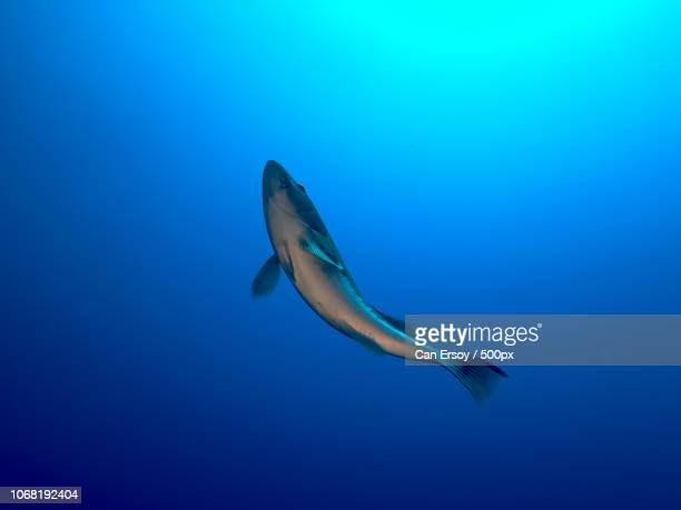 fish swimming underwater - 一匹 ストックフォトと画像