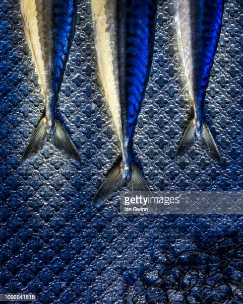 fish tails - ian gwinn stock photos and pictures