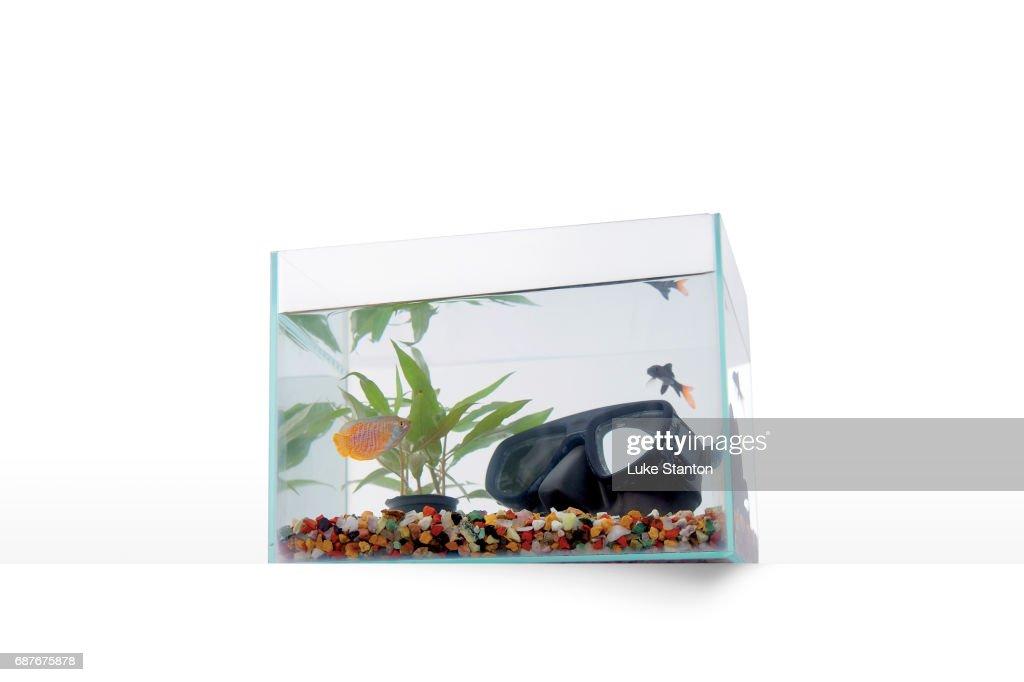 Fish tank with scuba goggles : Stock Photo