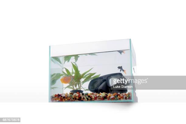 fish tank with scuba goggles - aquarium haustierbedarf stock-fotos und bilder