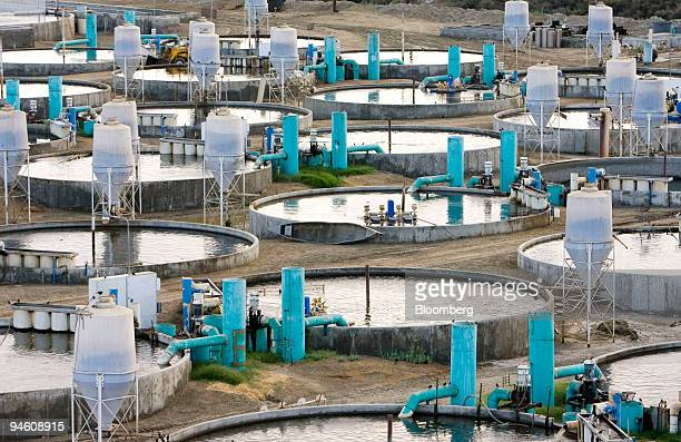 Fish tanks at the Kent Seatech aquaculture facility contain stripped bass and tilapia fish in Mecca California Tuesday August 29 2006 Growing up as a...