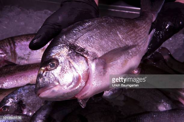 Fish the underrated vitamin bomb Wether fried deepfryed or stewed fish is rich in protein and minerals and should not be missing on any food plan The...