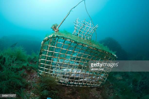 Fish Trap in Reef Cap de Creus Costa Brava Spain