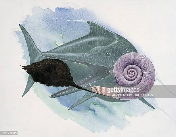 Fish with an ammonite