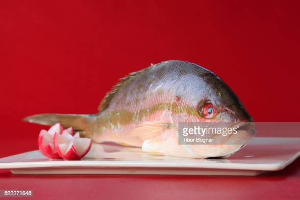 fish, yellowtail snapper, - kruisbloemenfamilie stockfoto's en -beelden