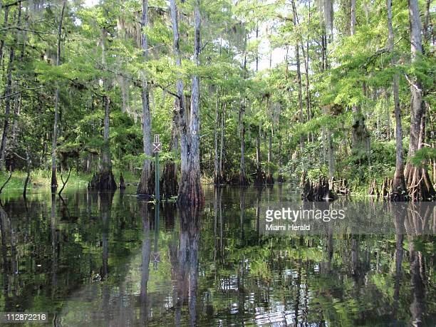 Fisheating Creek in Palmdale Florida which flows trickles and meanders some 50 miles from Highlands County south and east to Lake Okeechobee could...