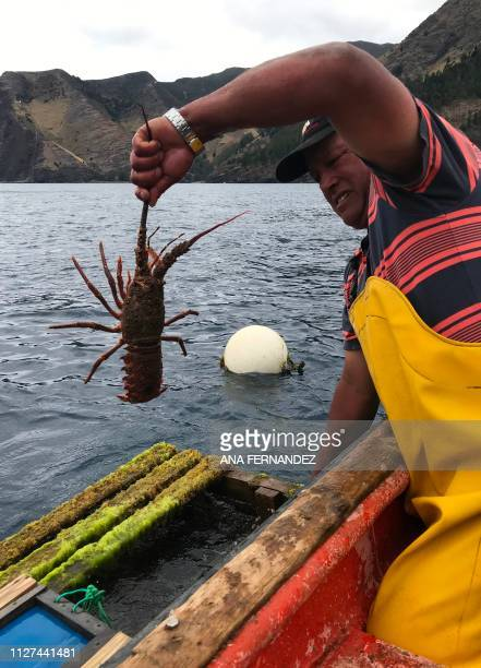 Fisherman Alberto Vergara collects lobsters from a trap off Robinson Crusoe Island in the Pacific Juan Fernandez Islands off the coast of Chile on...