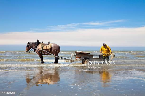 Pescador de Bélgica en el Mar del Norte