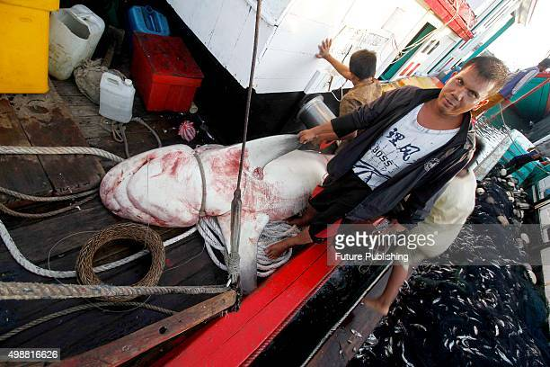 Graphic Content*** BANDA ACEH INDONESIA NOVEMBER 26 Fisherman carry Shark for sale at the traditional Lampulo fish market on November 26 2015 in...