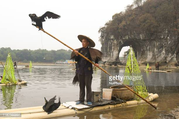 A fisherman catching fish using Cormorants birds in Guilin On Tuesday October 22 in Guilin Guangxi Region China