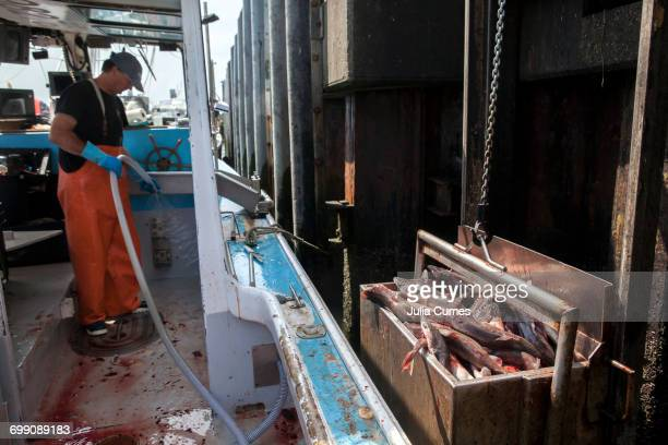 a fisherman cleans up while unloading his catch - dogfish stock pictures, royalty-free photos & images
