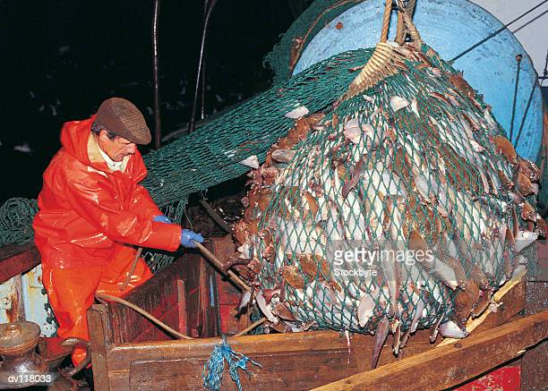 Fisherman emptying catch into fish pound on 20m trawler in North Sea,UK
