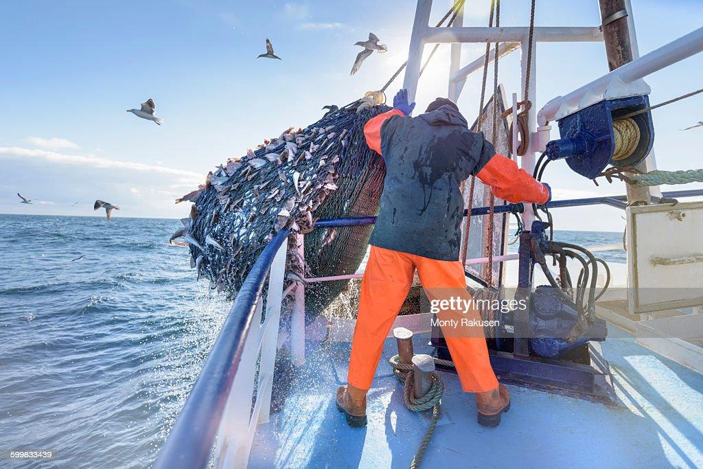 Fisherman emptying net full of fish into hold on trawler : Stock Photo