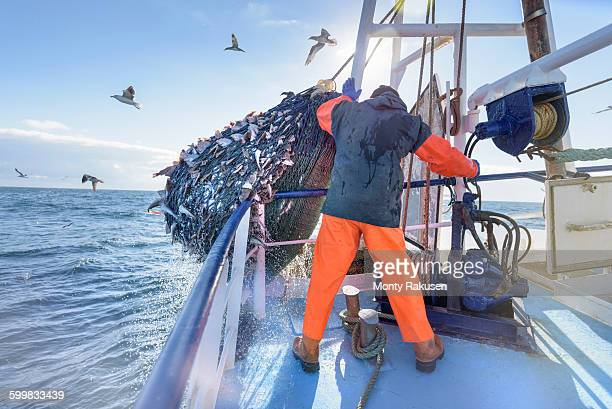 fisherman emptying net full of fish into hold on trawler - fishing industry stock pictures, royalty-free photos & images