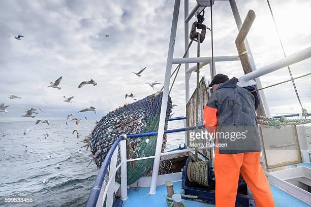 Fisherman emptying net full of fish into hold on trawler
