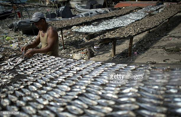 Fisherman Estelito Marijuan arranges dried fish at Manila Bay on November 21 2014 World Fisheries Day is commemorated every November 21 and was...