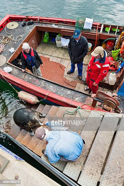 fisherman feeding harbour seal mallaig highlands scotland - animal tamer stock photos and pictures