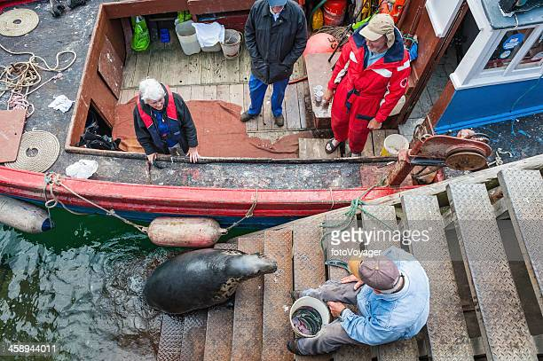 fisherman feeding seal in harbour highlands scotland - mallaig stock photos and pictures