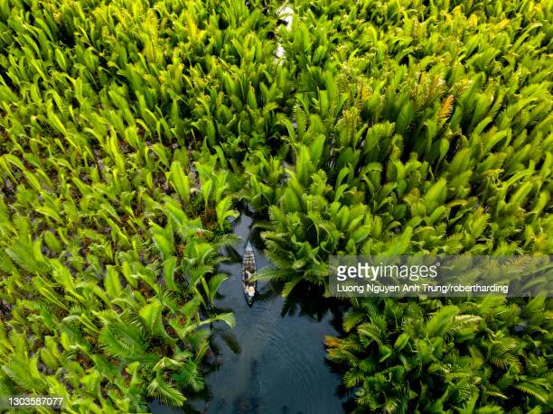 fisherman fishing in the middle of nipa palm forest, quang ngai, vietnam, indochina, southeast asia, asia - quảng ngãi stockfoto's en -beelden