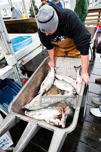 fisherman from seward,alaska usa  with his daily catch. - barrow alaska stock pictures, royalty-free photos & images